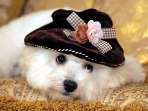 W様のご愛犬 ヴィヴィアンちゃん