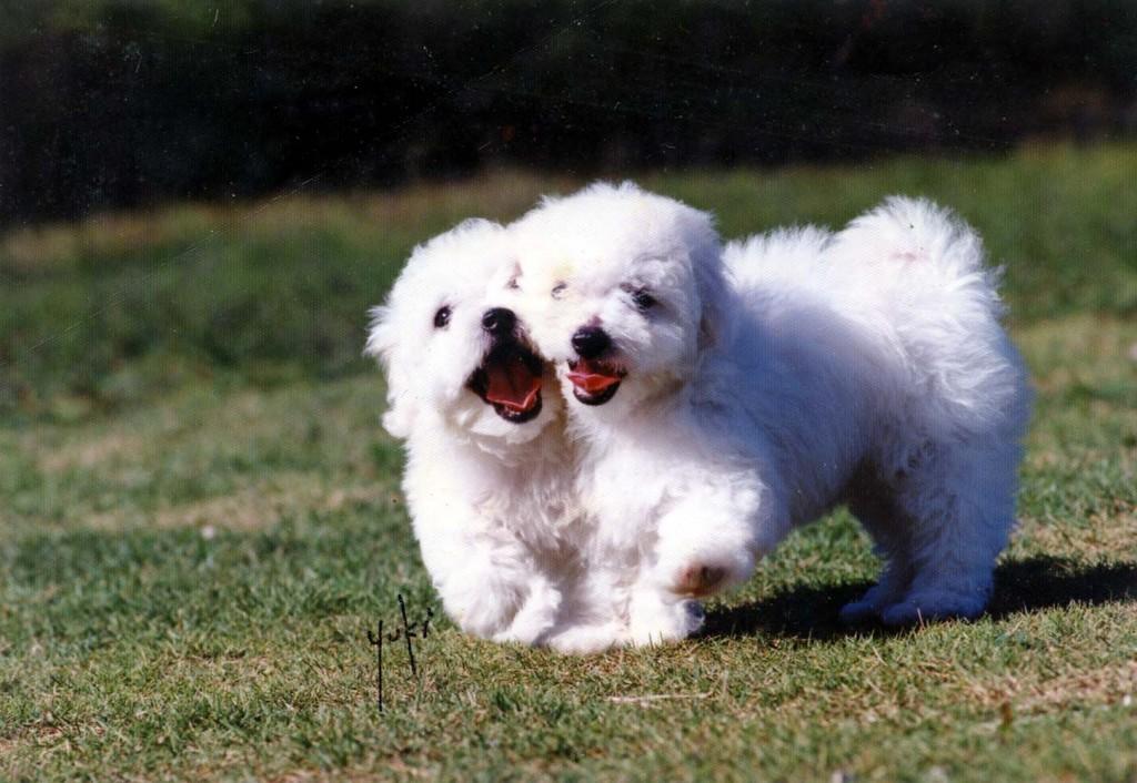 愛犬ボロA