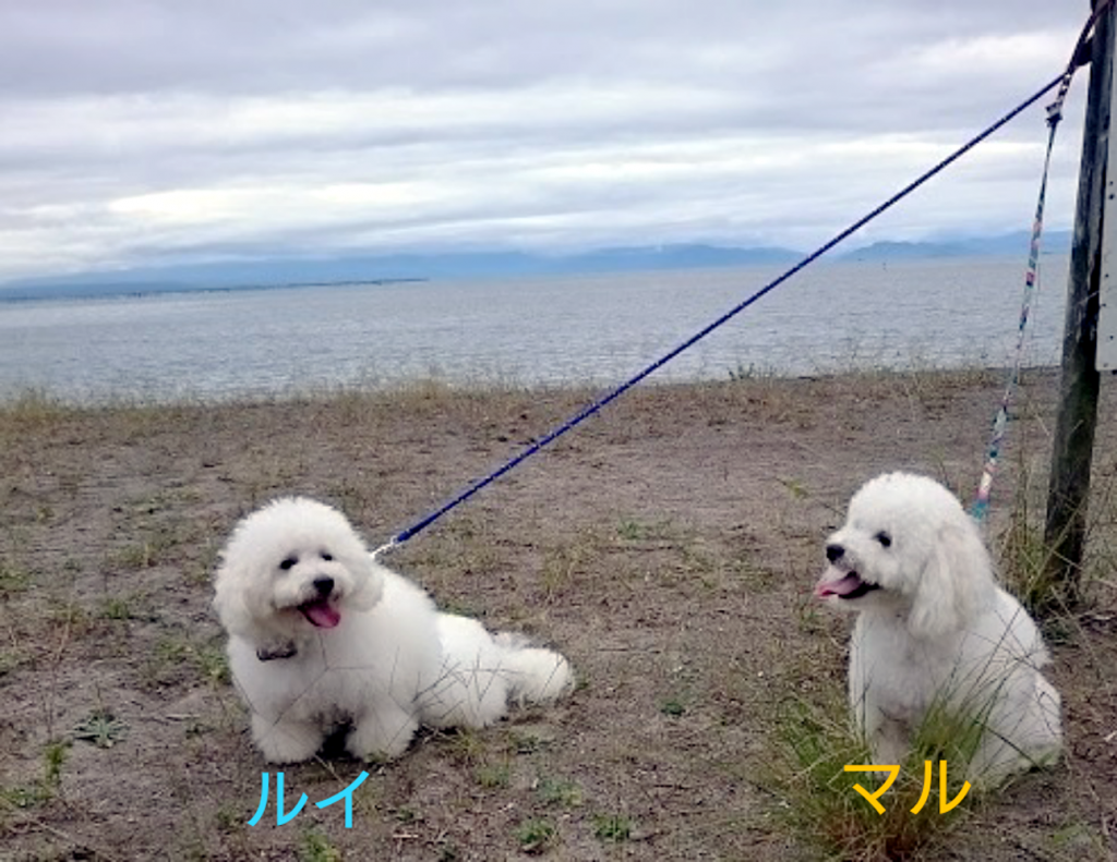 2017秋オフ会ルイ&マル琵琶湖