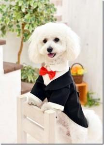 岡山県 音田様のご愛犬 ボロニーズ!  ポート君!