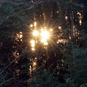 太陽がいっぱい?