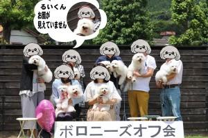 岡山県 音田様のご愛犬 ボロニーズ! マリンちゃん! ポート君!