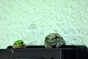 台風に必死に耐えているカエルさん達!!