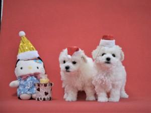 【日本のクリスマスは山口から!!】