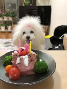 大阪市 鉄川様のご愛犬 ボロニーズ! シェリーちゃん、!