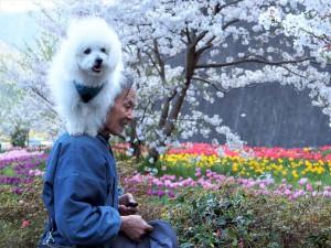 和歌山県 高艸様のご愛犬 ボロニーズ! ビタミン君!