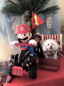 兵庫県 大西様のご愛犬 ボロニーズ! アルト君!
