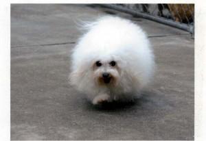 子犬はコロナ感染拡大のため、独自の販売をさせていただきます。
