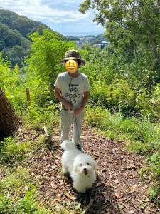 神奈川県 小林様のご愛犬 ボロニーズ!  ハロ君!